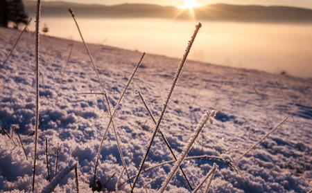 Frosty grass with snow asn sunset