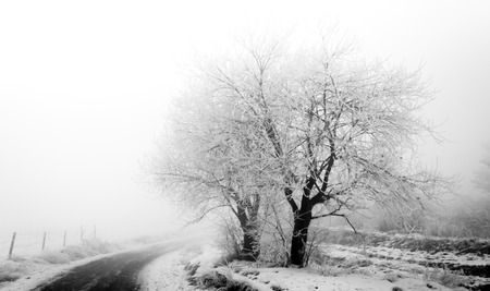 Frosty trees on the muddy roadside