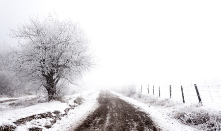 Frosty winter rural scene photo