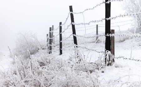 Frosy winter fence with barbed wire