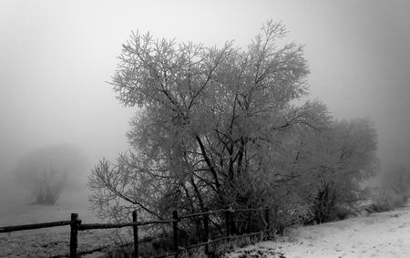 Misty roadside trees in the dusk Stock Photo