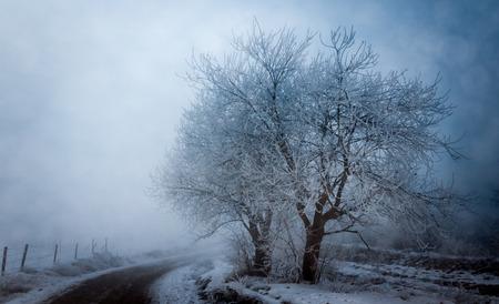 Misty roadside trees Stock Photo
