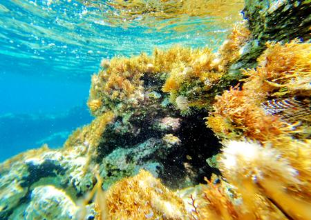 Abstrakcjonistyczna podwodna scena morze, Turcja. Rośliny morskie na dnie morskim pokrywają falę. Zdjęcie Seryjne