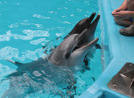 Happy dolphin swims in blue water. Happy dolphin sun bathing