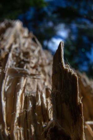 Hand pointer up. A stump shard that looks like a hand pointing upwards.