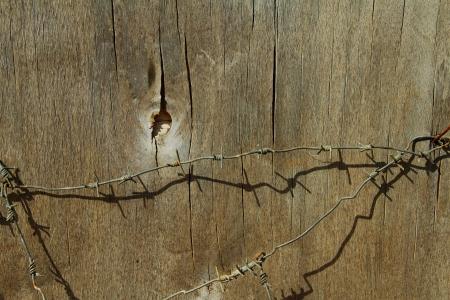 est: partie de la surface du bois, qui est enveloppe avec du fil de fer barbele  Stock Photo