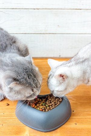 Two cats eating food from pet bawl in shape of heart.