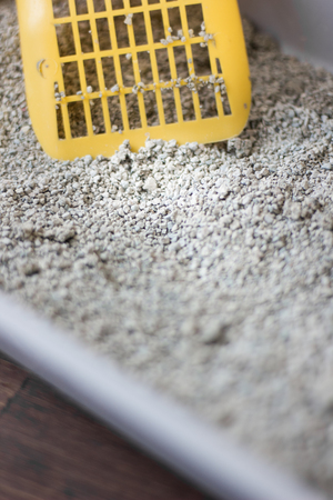 Yellow scoop standing on the litter sand on the litterbox Stock Photo