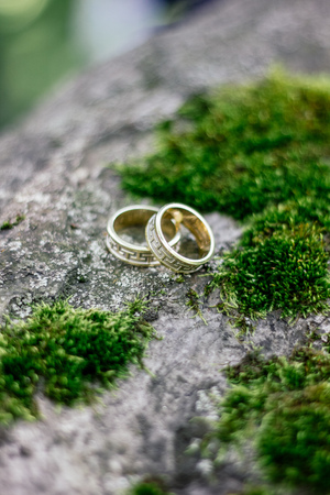 wedding rings on tree with green moss.