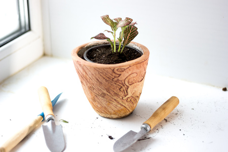 House plant gardening design - potted plant with the equipment