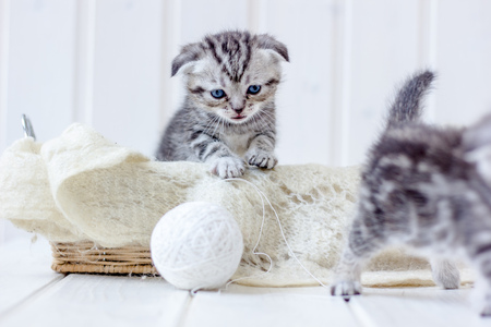 Young kitten plays with white ball of wool
