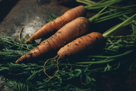 Nice Carrots with haulm on the black rustic background