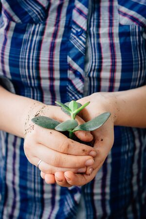 Plant in hands - the concept of new life and safety 写真素材