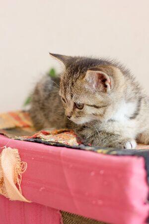 Beautiful cute kitten sitting on a colored box.