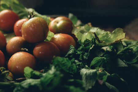 Beautiful cherry tomatoes and green lettuce in black studio.
