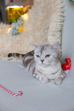 Cat waiting a christmas celebration on a white sofa.
