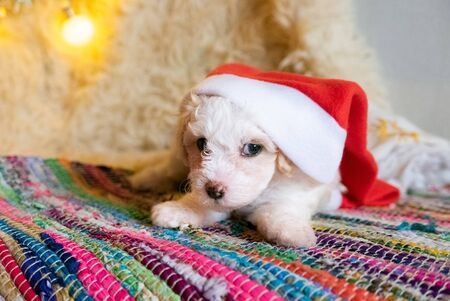 Cute dog puppy with big christmas hat.