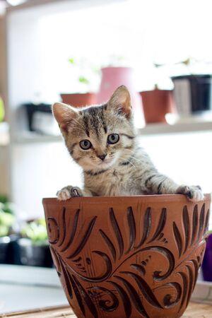 Funny little kitten in a flower pot 写真素材