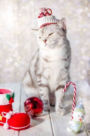 Funny christmas cat with santa hat on head and christmas toys