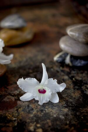 Spa stones and orchid flowers on dark background