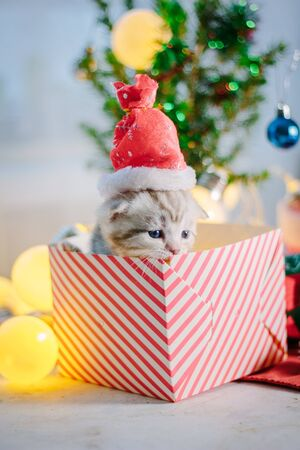 Beautiful kitten in a christmas gift box.