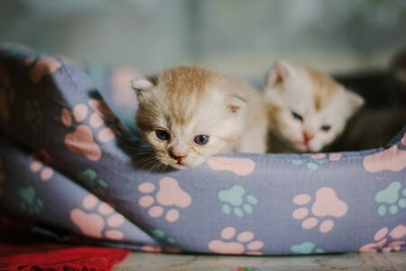 Little awesome kittens on a table.