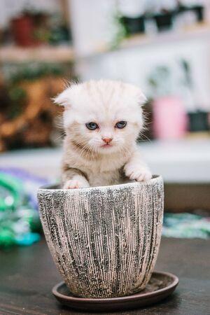 Beautiful kitten sitting in a flower pot. 版權商用圖片