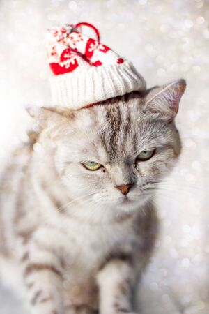 Christmas cat with funny santa hat on head