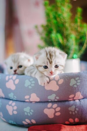 Two adorable little kittens sitting in a pet pad.