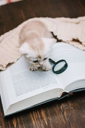 Adorable gray kitten on a paper book.
