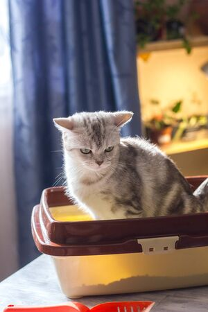 Cat sitting in a cat litter box or tray