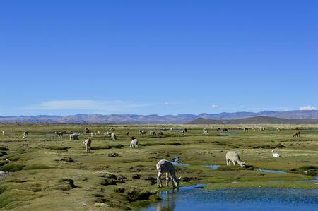 aguada: Salinas y Aguada Blanca National Reserve