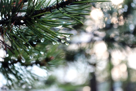 especially: In Yakutia, after the rain all fascinates especially its nature ...