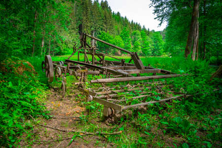 Old harrow in the middle of the Mitterfels forest, Bavarian Forest