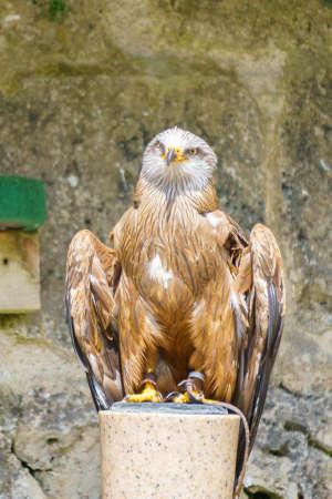 Different birds of prey sitting or in flight