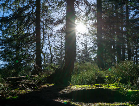 Hking to the Käsplatte by Sankt Englmar in the Bavarian Forests Germany