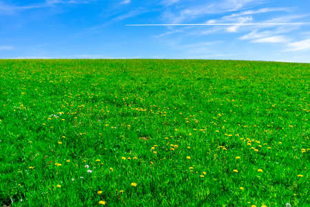 Meadow with Dandelions under the Sky in the Bavarian Forests Germany