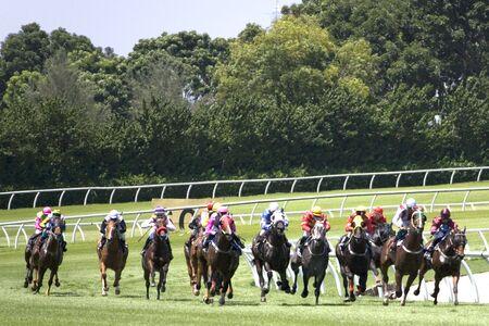 sweepstake: Horse Racing