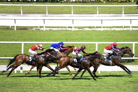 horse races: Carreras de Caballos