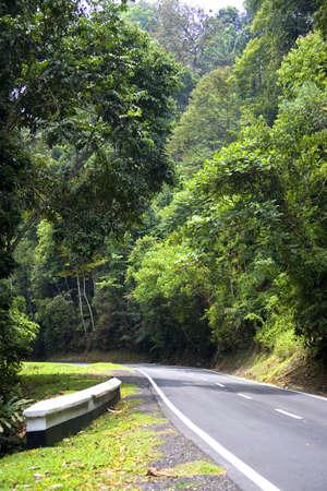 Tropical Rainforest Road photo