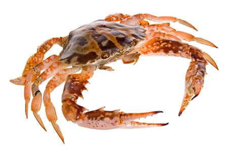 crabmeat: Isolated image of a crab. Stock Photo