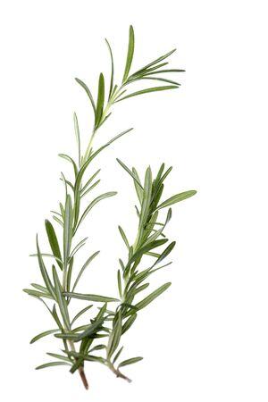 Isolated image of fresh rosemary herbs.