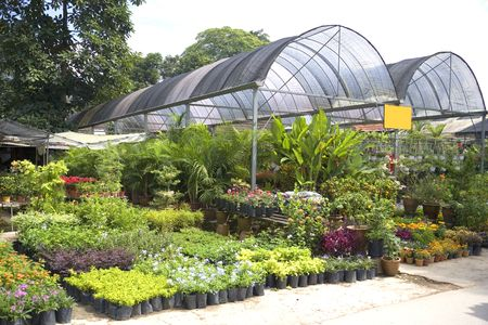 Image of a tropical plant nursery in Malaysia. Stock Photo