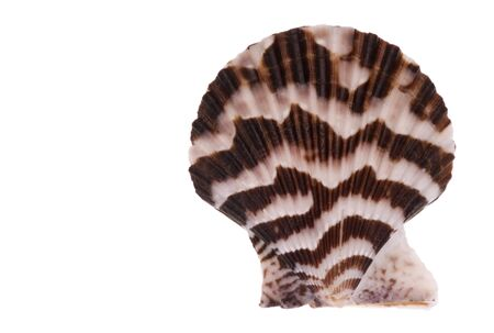 Isolated macro image of a scallop. Stock Photo - 3667874