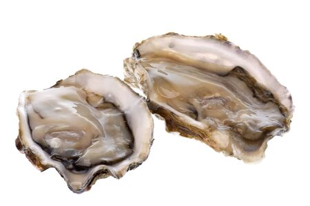 completely: Isolated image of fresh oysters against a completely white background. Stock Photo