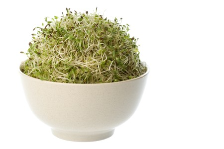 Isolated image of organic alfalfa sprouts. Stock Photo