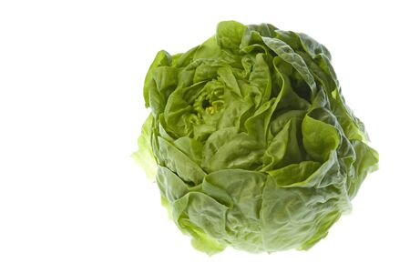 Isolated macro image of a butterhead lettuce. Stock Photo - 4126572