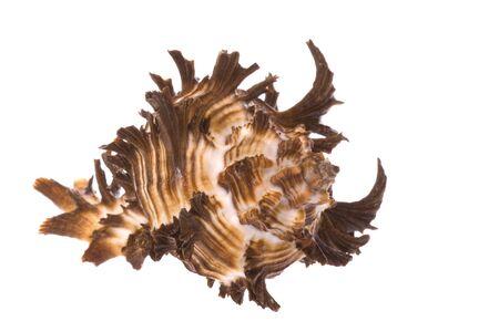 Isolated macro image of a sea shell. Stock Photo - 4126776
