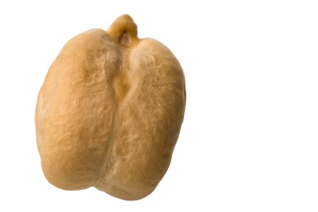 chick pea: Isolated macro image of a chick pea.