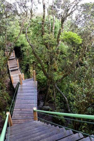 characterized: Walkway through the worlds oldest mossy forest at Cameron Highlands, Malaysia. A mossy forest, also called a fog forest or cloud forest, is a generally tropical or subtropical evergreen montane moist forest characterized by a high incidence of low-level